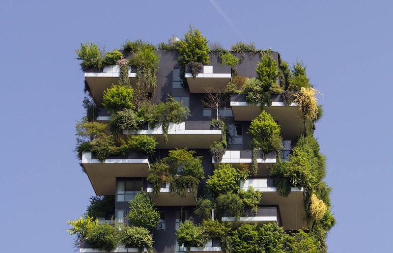 Edifici cobert de vegetació